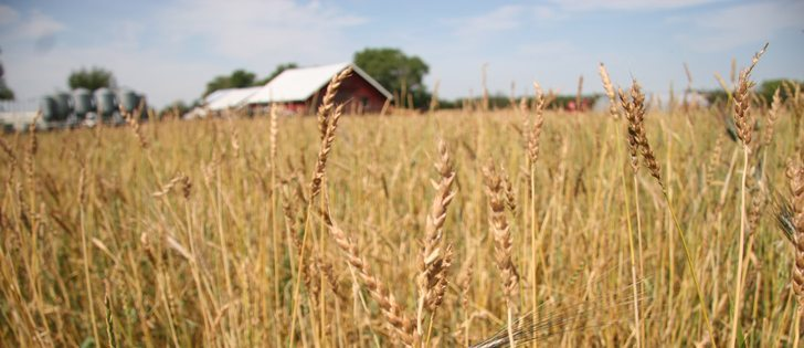 Higher prices for organic grain have returned after a lengthy hiatus, say industry officials.