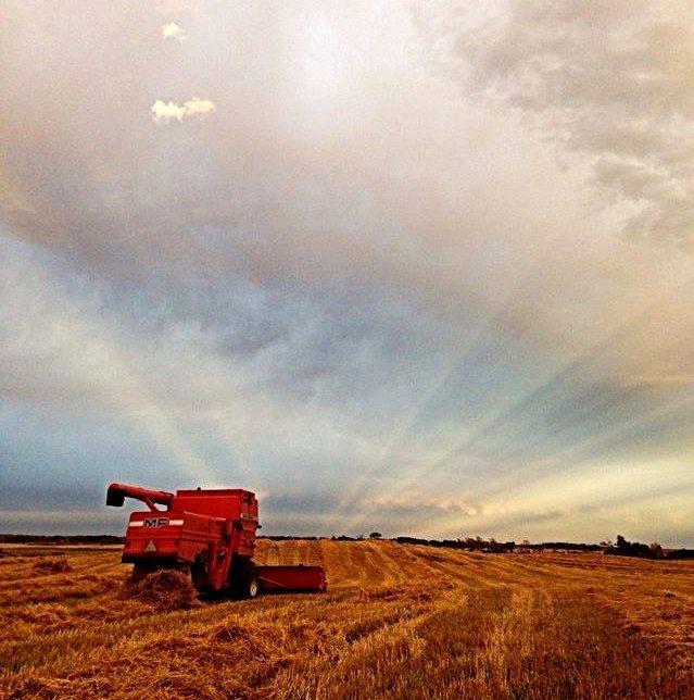 Photo by Janina Kemp taken at Kempstone Livestock in Broadview, Saskatchewan.