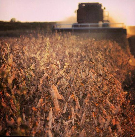 Melanie Hawrysh @MHawrysh @westernproducer #harvest13 pic.twitter.com/eeqQcfZ5F1
