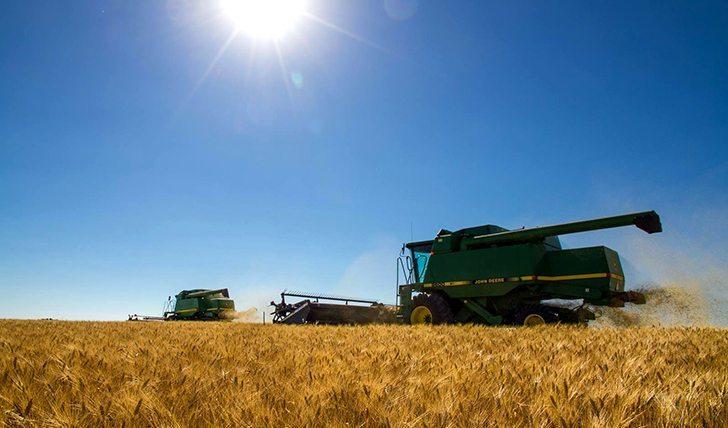Dwane Morvik #Harvest13 Cutting durum west of Eastend, SK