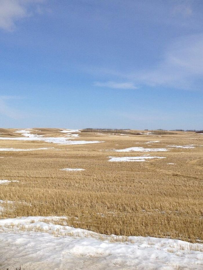 MICHEAL WIPF ‏@MichealWipf 1h Snow is almost gone. Come on #plant14. @westernproducer
