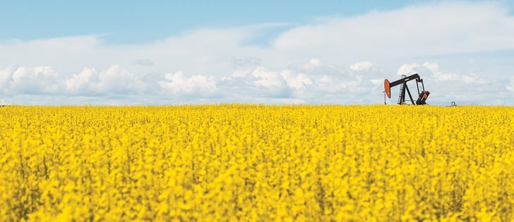 Ontario's greener diesel rule may be good news for canola growers.  |  File photo