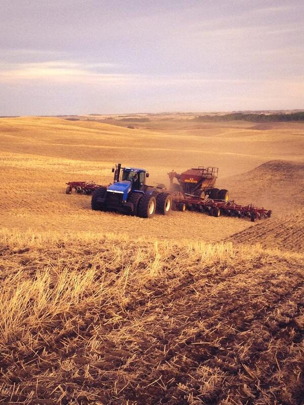 MICHEAL WIPF ‏@Micheal B Wipf Another beautiful #plant14 evening. @The Western Producer