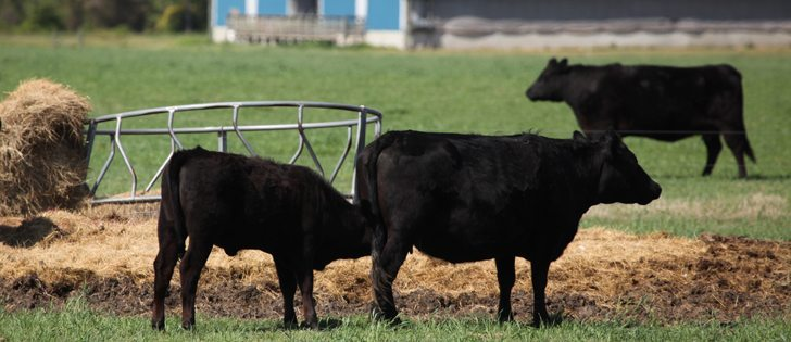 Cattle inventories continue to shrink as producers capitalize on higher prices.  |  File photo