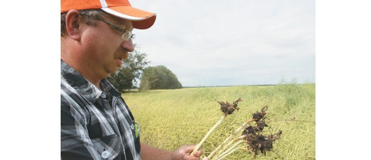 Alberta farmer Dave Trautman has clubroot in one of his fields.  |  Mary MacArthur photo