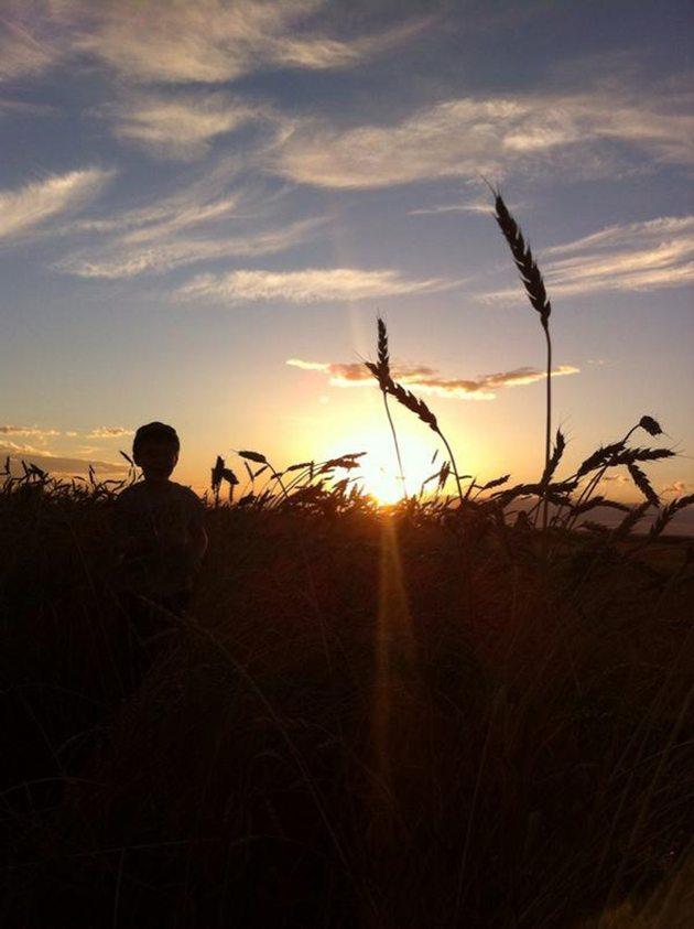 Millard Farms @millardfarms #harvest14 @westernproducer
