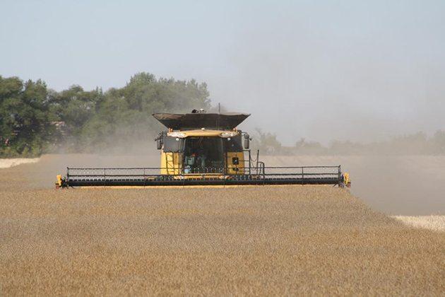 Landon Friesen @landon707 Combining #canola Working great! #harvest14 @westernproducer @NewHollandAG