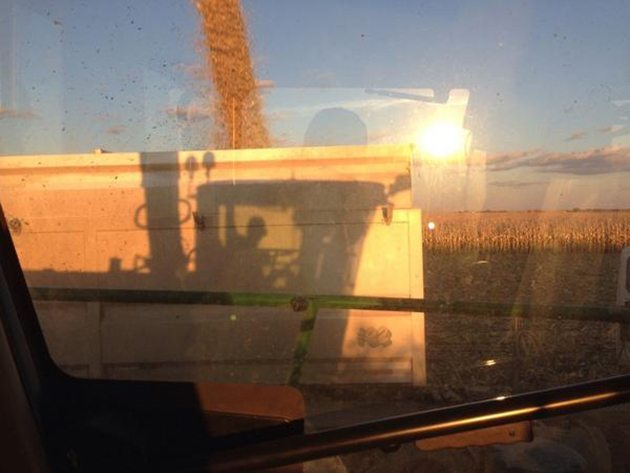Kevin Campschroer @farmboy542 Sunset corn silage. #harvest14 @westernproducer