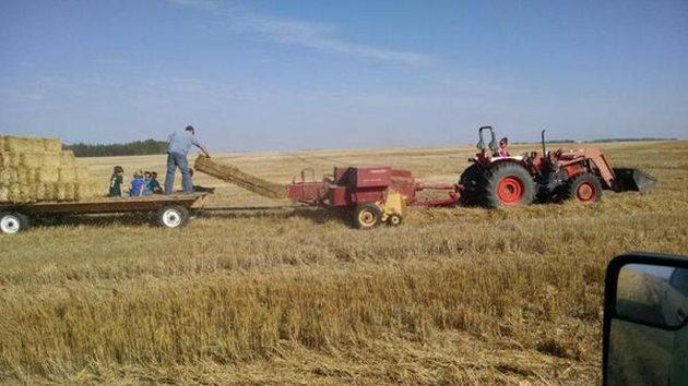 Landon Friesen @landon707 My brother @friesenderekj1 and his family making some bales for his sheep. @westernproducer #familyfarm #bale14