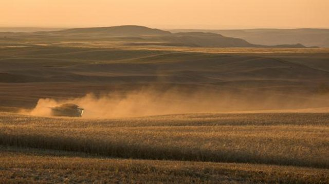 Dwane Morvik @DwaneMorvik Another harvest shot near Eastend, SK. @westernproducer #harvest14