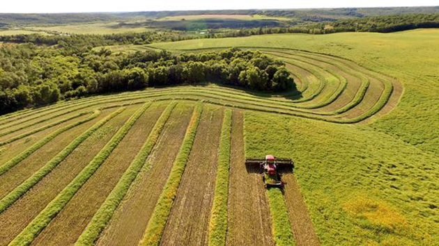 Agritruth Research ‏@Agritruth Great view of @BarryGurr swathing field of InVigor L252 next to river valley. @westernproducer #westcdnag #harvest15