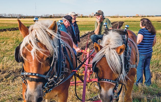 Always eager to talk horses and plowing, Dan Fontaine and his wife Suzanne, right, of La Broquerie, Man., chat with Gary Kirk, left, of Westhope, North Dakota, and Rodger Hanson of Antler, N.D., while the team of Copper and Syd, take a breather. | Sandy Black photo