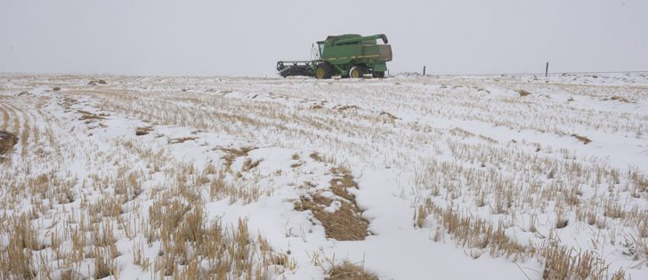 Winter blew in early over many parts of the Prairies, leaving crops standing or in swaths.  | William DeKay photo
