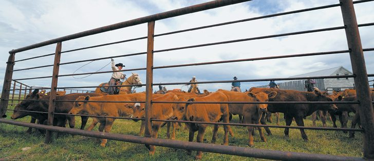 It may be an opportune time for cattle producers to expand their herds, but they should have a thorough understanding of their businesses before they do so, say experts.  |  Mike Sturk photo