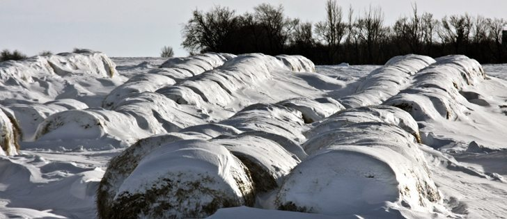 A forage specialist says the best way to store bales is in single rows, six to 10 inches apart.  |  File photo
