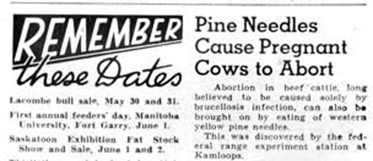 Issue date: MAY 31, 1951. Livestock producers were looking for ways 