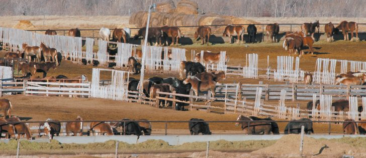 The federal government is waiting for clarification on a European Union rule that will affect horse slaughter in Canada. | File photo