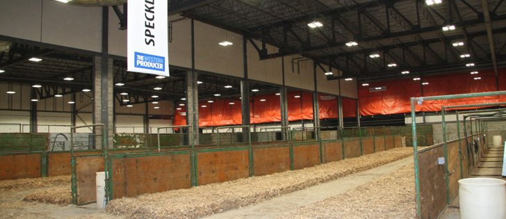Enough of the new International Trade Centre at Evraz Place is complete that it will house some cattle, horses, sheep and goats during Canadian Western Agribition. | Karen Briere photo