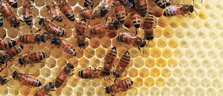 In a recent scientific paper University of Tennessee scientists compared beehives located in agricultural land to bee colonies in non-farming areas.