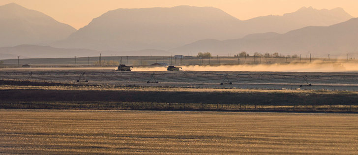 Two combines work a field late in the evening near Western Feedlots west of High River, Alta. |  Mike Sturk photo