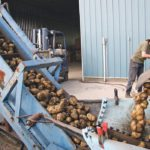 This year Prince Edward Island processing plants are bringing in potatoes from Alberta and will likely seek supplies from south of the border as well.  |  File photo