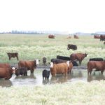 Murray Feist, ruminant nutrition specialist at the provincial agriculture ministry, said 555 water bodies were sampled, including dugouts, wells, water lines, sloughs and other surface water sources. Sixty-two percent were dugouts, 13 percent were wells and the remainder came from the other sources.