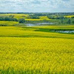Canola had been looking rather expensive compared to other oilseeds, which likely contributed to the softer tone. A drop in Chicago Board of Trade soyoil futures and other world vegetable oil markets also weighed heavily on the market. The threat of a strike at Canadian Pacific Rail was also still a factor in the background. | File photo