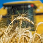 The USDA pegged wheat carryout for the upcoming 2018/19 marketing year at 955 million bushels, which was about thirty million bushels above average trade guesses. | File photo