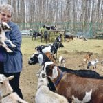 Goats make this Alberta farm a lively place