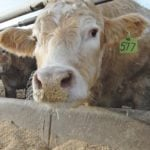 Rumen acidosis is an animal welfare problem