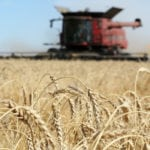 Wheat industry hopes import ban short-lived