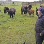 Alta. producer finds success raising bison