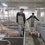 Workers move young pigs out of stalls at a hog farm in China's Guangxi province earlier this year. African swine fever has become a problem for the country's hog sector since the outbreak began.  |   REUTERS/Dominique Patton photo