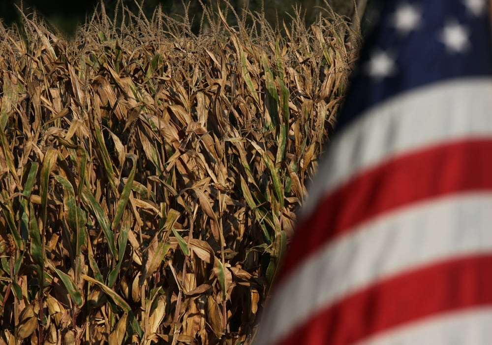 The U.S. Department of Agriculture pegged average corn yields at 181.3 bushels per acre in a report released Sept. 12. That was up by about three bushels per acre from the August report and well above even the top end of trade guesses. | File photo