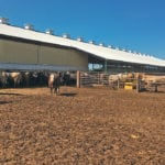 The pens at the Van Osch family's feedlot are designed to give cattle access to the outside and a barn for protection from the weather.  | Barbara Duckworth photo