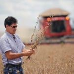 Farmer Julimar Pansera inspects plants during the soy harvest near the town of Campos Lindos.  |  Ueslei Marcelino photo