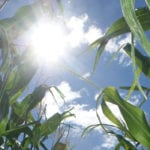 Canadian farm production likely to increase under climate change: FAO