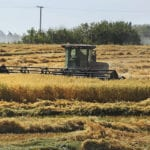 Millers likely to see tighter oat supplies