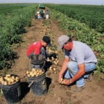 Farms exempt from new Alta. minimum employment age