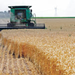 Modest increase expected in U.S. winter wheat acreage