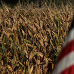 U.S. Farm Credit CEOs see more financial pain if no China trade deal