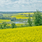Canola makes small gains