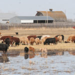 The U.S. cow herd expansion is slowing, but a healthy economy and growing exports keep demand strong. | File photo