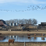 Spring weather may swing Western Canadian feed markets