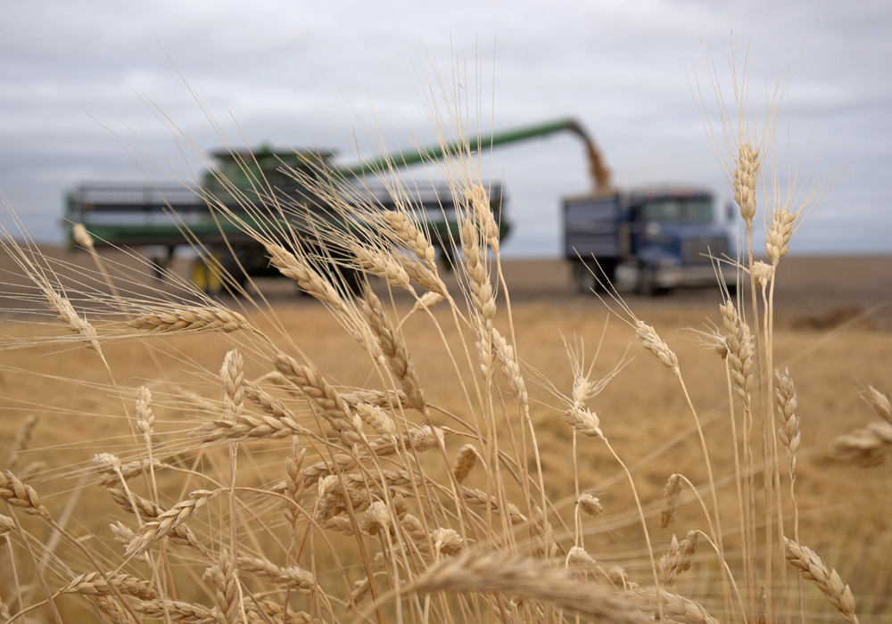 The budget assumes crop production in 2019 similar to last year when the third largest crop on record, 35.4 million tonnes, was harvested even in dry conditions. | File photo