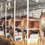 PMU ranchers feel pinch as cuts announced