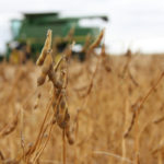 Chicago Board of Trade soybean and corn futures plummeted to new contract lows on Monday - with soy plunging to the lowest levels seen in nearly eight months - after U.S. President Donald Trump said he would raise tariffs on Chinese goods this week. | File photo