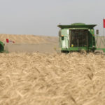Wide range of losses in Western Canadian wheat prices