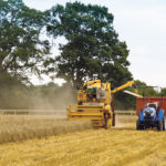 The Hands Free Farm in Great Britain is preparing to grow three different grains on 85 acres thanks to extra funding. These photos are from last year's project.  |  Hands Free Hectare photo