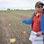Foliar spray control of flea beetles gets a look by federal researchers